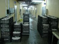 Mantar Üretim Tesisi  Mushroom Production Plants