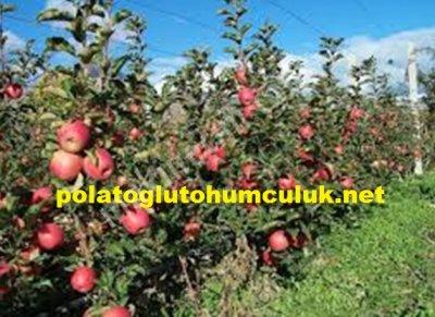 meyve Fidanı meyve Fidanı Satışı meyve Fidanı Çeşitleri meyve Fidanı Fiyatı