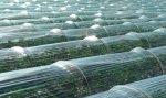Mini Greenhouse Bars