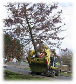 Ağaç Sökme Dikme Ataşmanı
