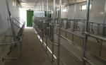 Süt Sağım Sistemleri