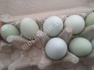 Yeşil Yumurta