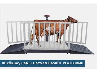 Satılık Sıfır satılık hayvan baskülü Fiyatları Samsun satılık hayvan baskülü,hayvan baskülü,ikinci el hayvan baskülü,tır kantarı,kamyon kantarı,samsunda baskül