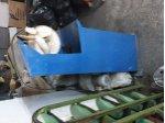 Ayakkabi Freze Açma Makinesi